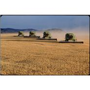 Combine harvesters at work in a field of wheat